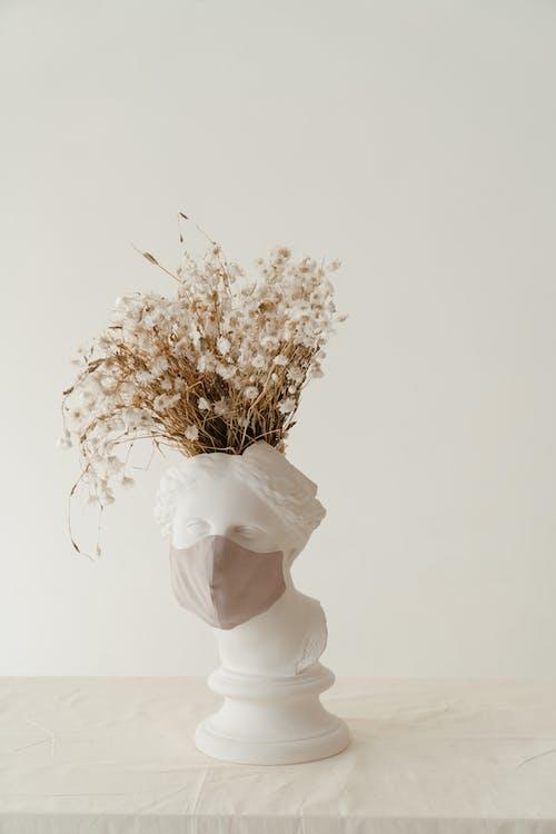 Fotos de stock gratuitas de antiguo, busto de cabeza, cabello