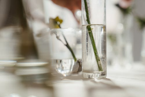 Photo of Stem in Clear Glass Vase With Water