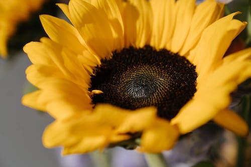 Fotobanka sbezplatnými fotkami na tému detailný záber, farba, flóra