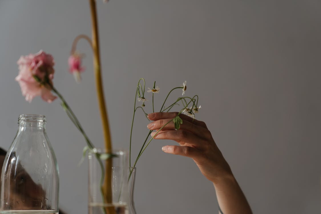 Person Holding White Flower Buds