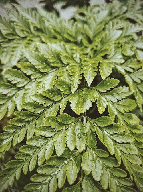 Darmowe zdjęcie z galerii z botanika, ekologia, flora