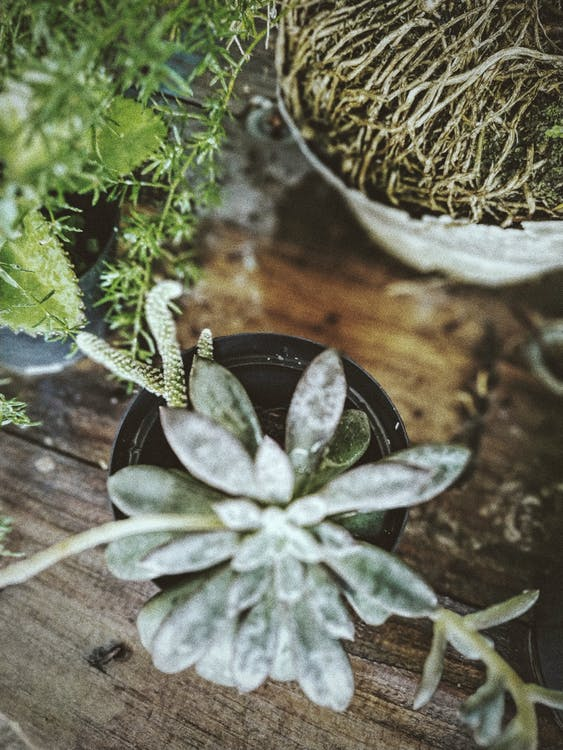 Top View Photo of Succulent Plant in Pot