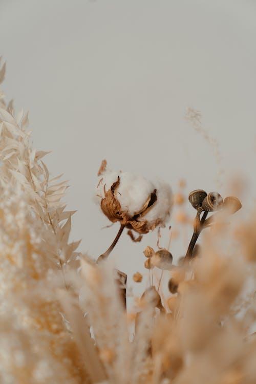 一串, 一束, 一束花, 一束鲜花 的 免费素材图片