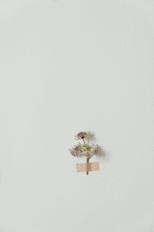 White and Green Flower on Brown Wooden Wall Mounted Rack