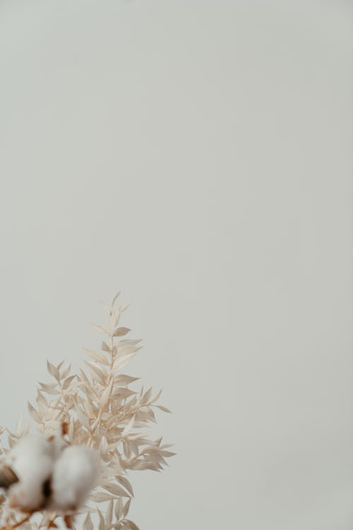 Brown Plant on White Background