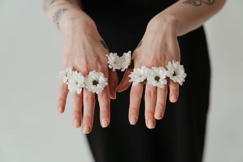 Foto d'estoc gratuïta de delicat, dits, flora, flors