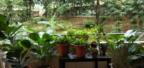 Free stock photo of Infinity garden