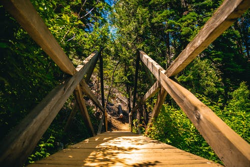 Free stock photo of bridge, foot bridge, forest