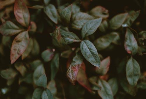 Foto stok gratis alam, berbayang, bunga, cabang