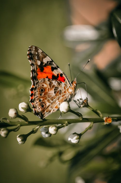 Colorful butterfly on blooming twig