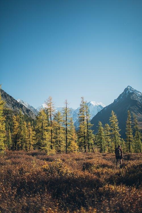 Kostenloses Stock Foto zu außerorts, bäume, berg hintergrund