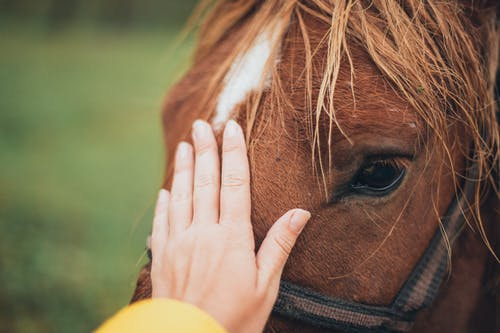 Person Holding Brown Horse
