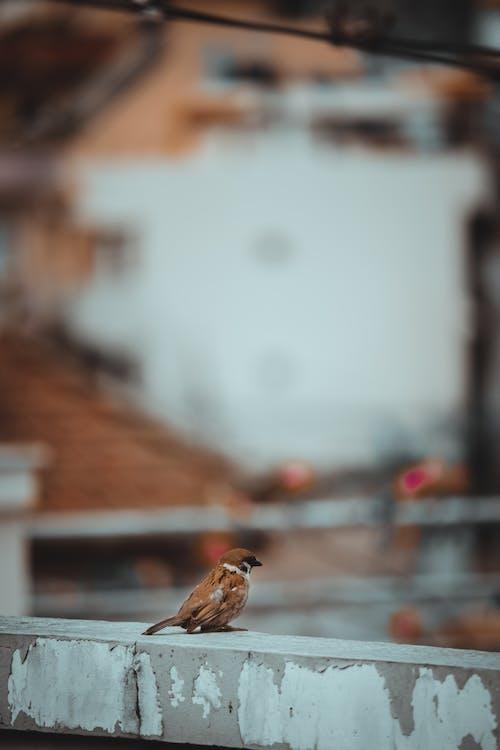 Darmowe zdjęcie z galerii z dzika przyroda, dziób, fotografia ptaków, fotografia zwierzęcia