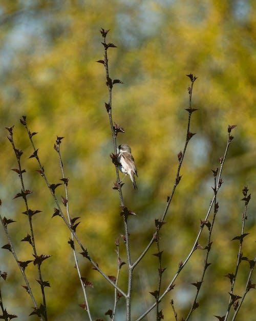 Free stock photo of bird, bird photography, birds