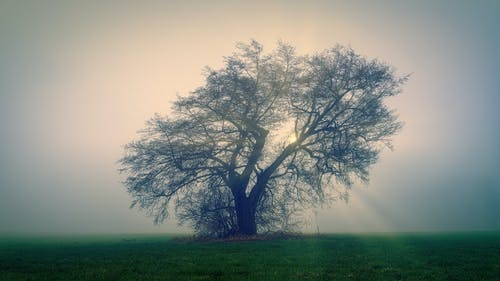 Photo of Tree on Grass Field