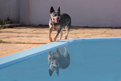 Photo of Dog Walking on Poolside