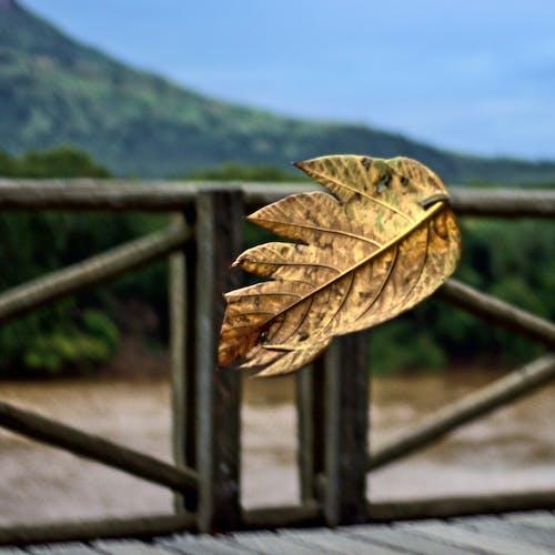 Gratis stockfoto met folha, h2o, herfst, ibituruna