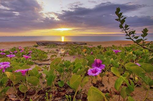 Ilmainen kuvapankkikuva tunnisteilla aamu, aamunkoitto, auringonlasku, auringonnousu