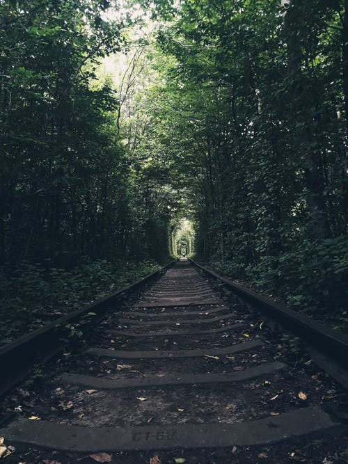 Black Metal Train Rail in the Forest