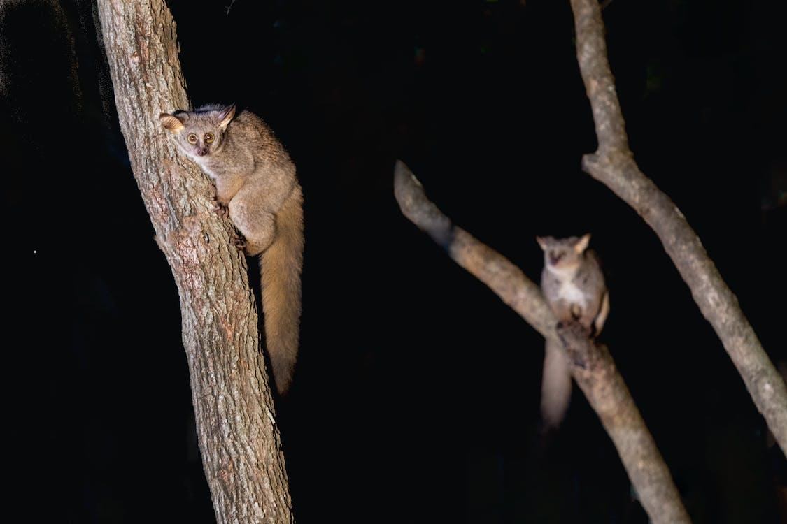 Brown Primate on Brown Tree