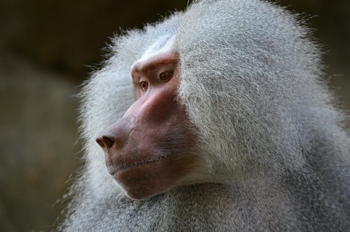 Close-Up Photo of Monkey