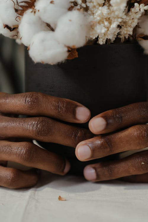 Person Holding Cotton Flower in Pot