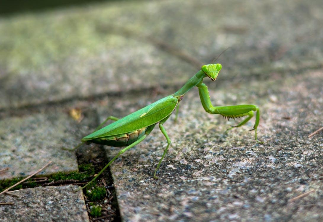 Free stock photo of insect, macro photo, macro photography