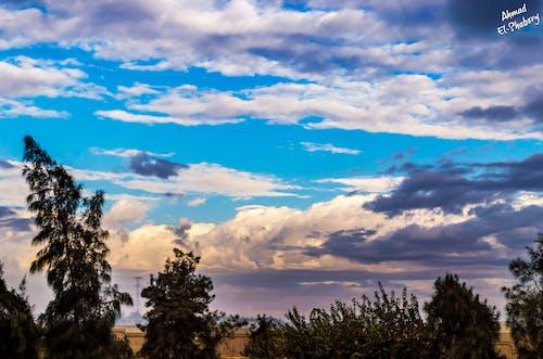 ağaç, bulut, gökyüzü, kış içeren Ücretsiz stok fotoğraf