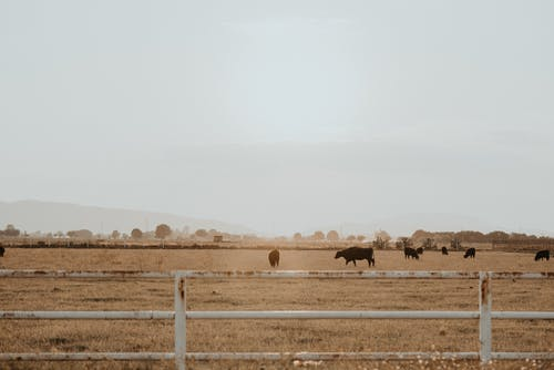 Photo of Cows on Grass Field