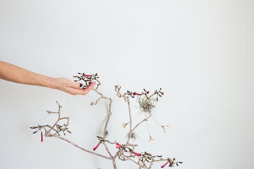Person Holding Brown Tree Branch