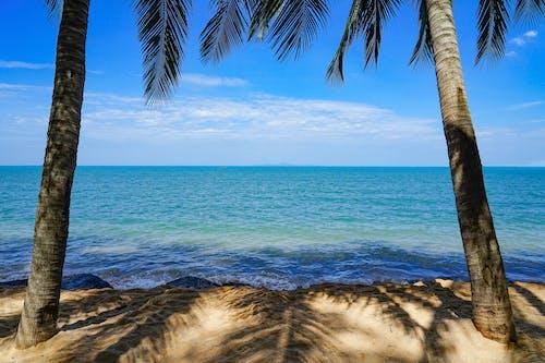 Free stock photo of beach, blur, calm, meditation