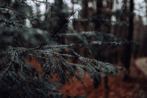 Selective Focus Photo of Tree
