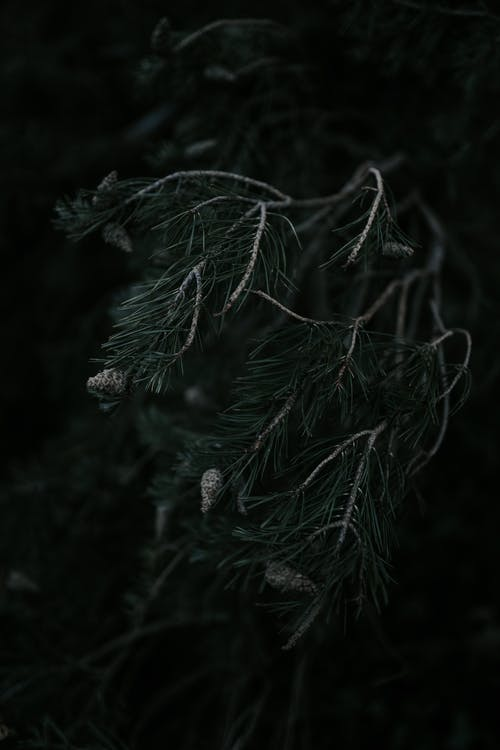 Dark Green Tree