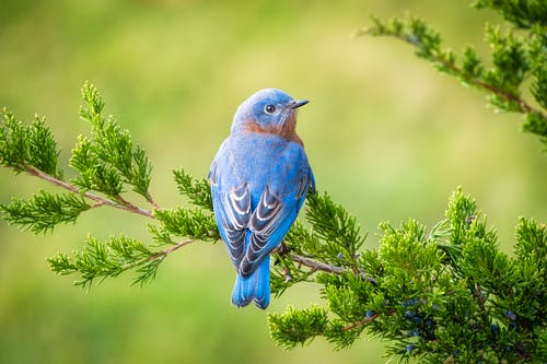 Blue Bird Perched on Green Plant