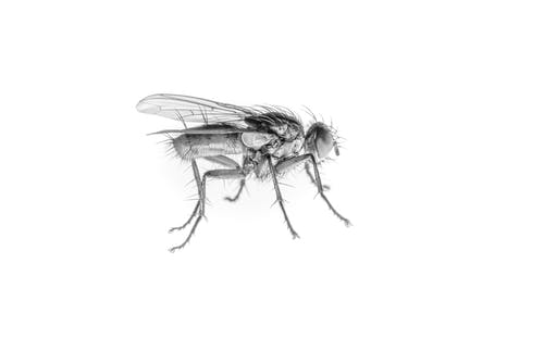 Free stock photo of b&w, bugs, fly