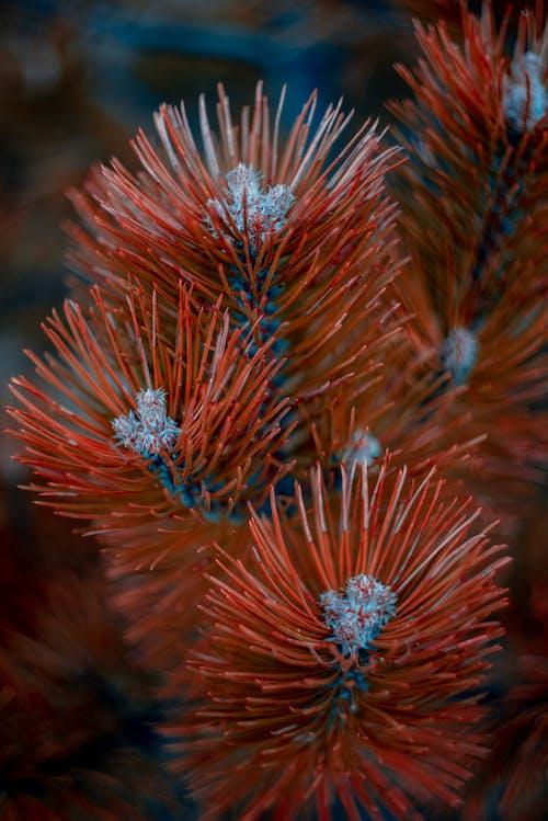Free stock photo of orange, pointy, tree