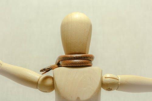 Immagine gratuita di animale, bianco, boa, cobra