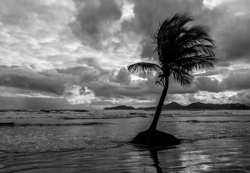 Black and white of wavy ocean with palm tree growing on sandy shore behind mounts under cloudy sky in overcast windy weather