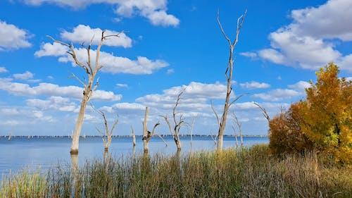 Free stock photo of australia, autumn leaves, dead