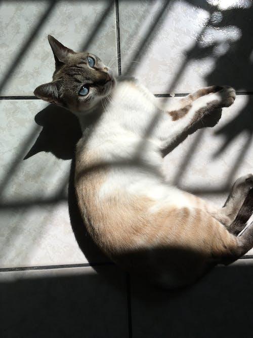 Photos gratuites de amour, animais, gato, gato domestico