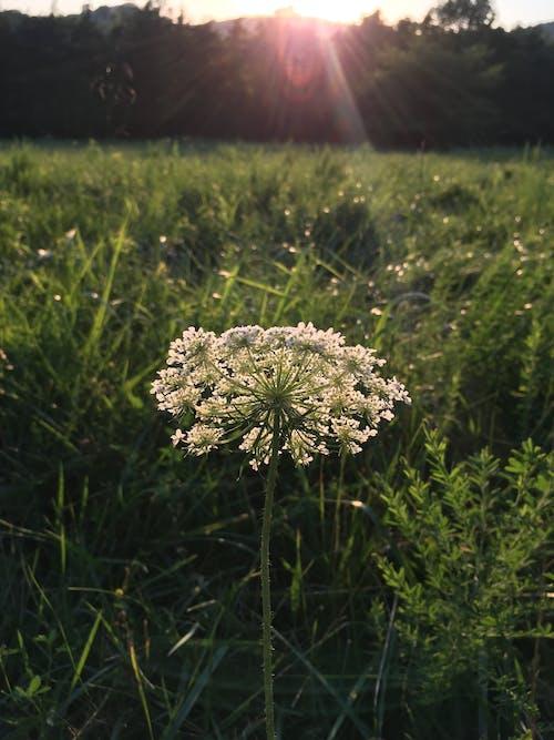 Photos gratuites de beleza da natureza, fleur, nature