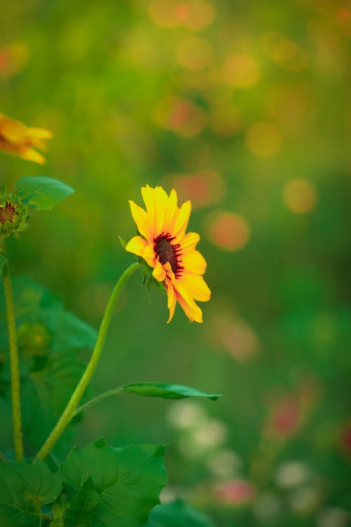 Blossoming daisy with yellow gentle petals on thin stalk with pointed leaf growing in garden in summer