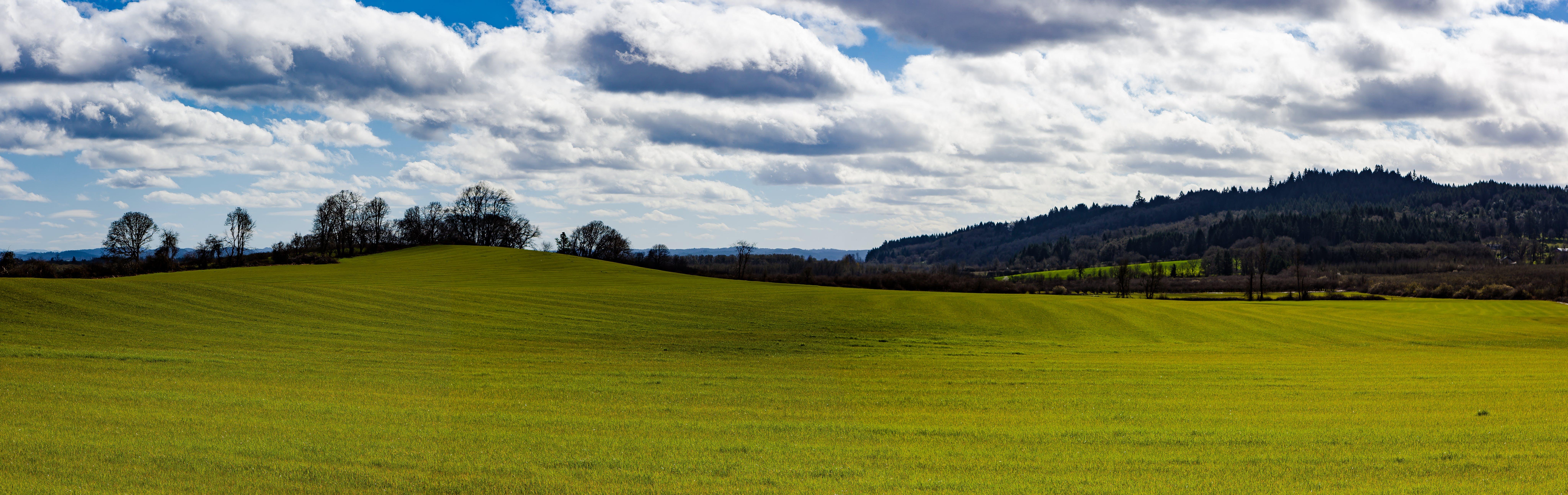 Free stock photo of grass field