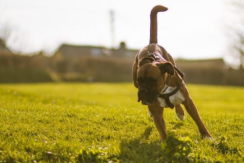 Foto stok gratis anjing, bermain anjing, hewan peliharaan, hewan piaraan
