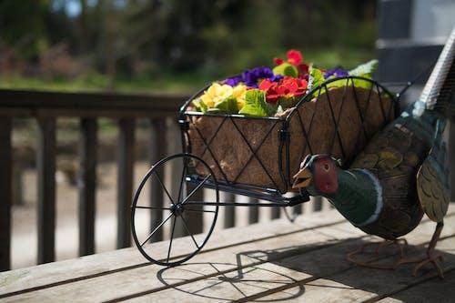 Foto stok gratis ayam, bunga-bunga, di luar ruangan, hiasan
