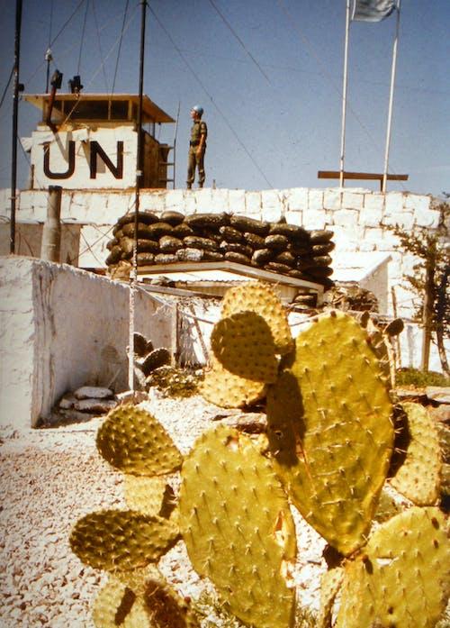 Free stock photo of armée, syrien