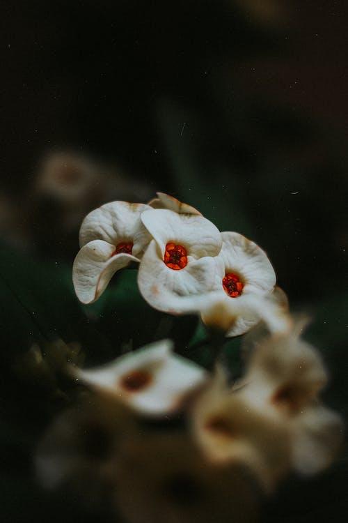 Imagine de stoc gratuită din apă, biologie, buchet de flori, centrale