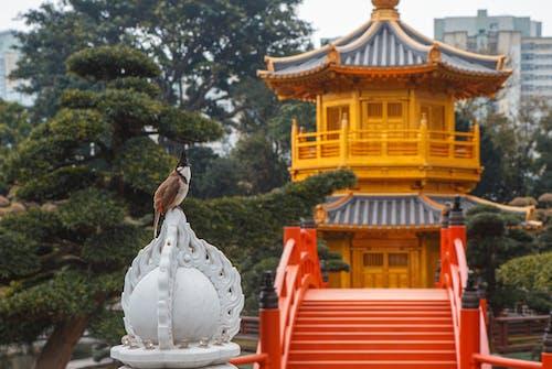 Darmowe zdjęcie z galerii z azja, hong kong, hongkong, ogród