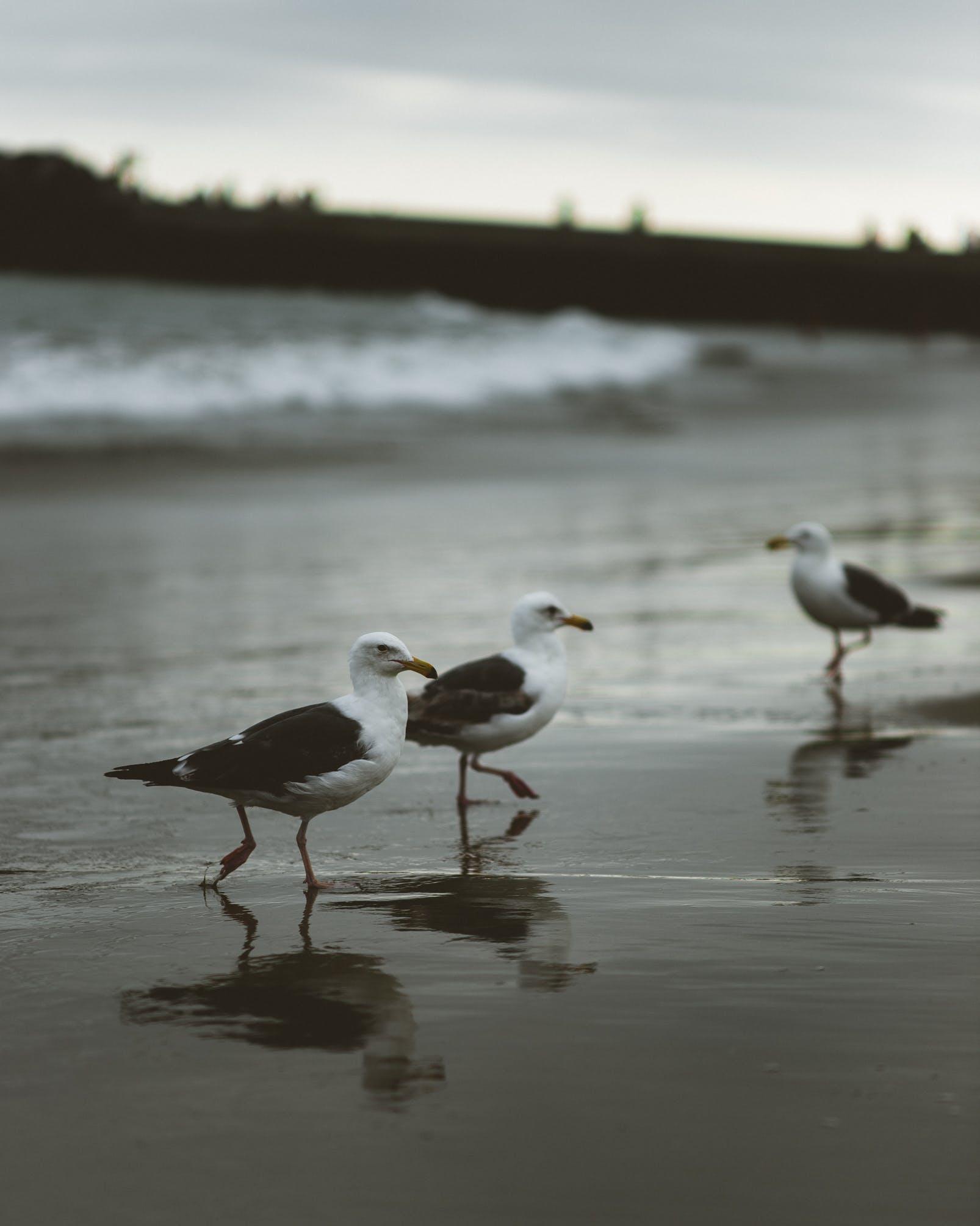 Three Birds Standing on Seashore