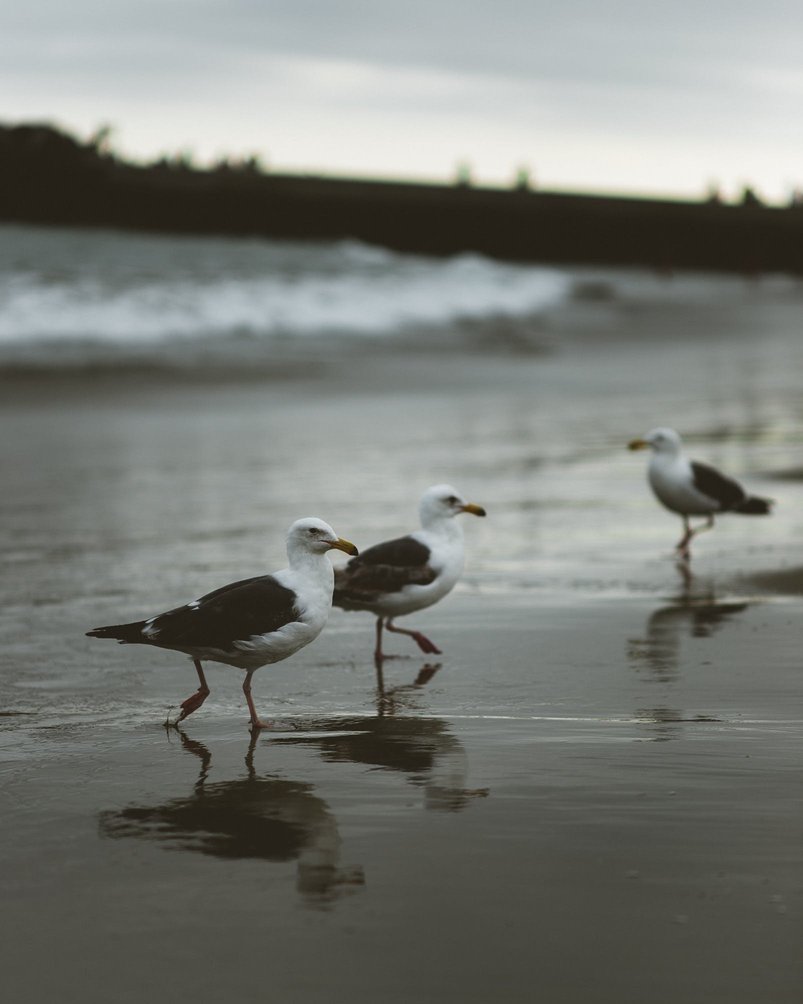 Three Birds Standing on Seashore